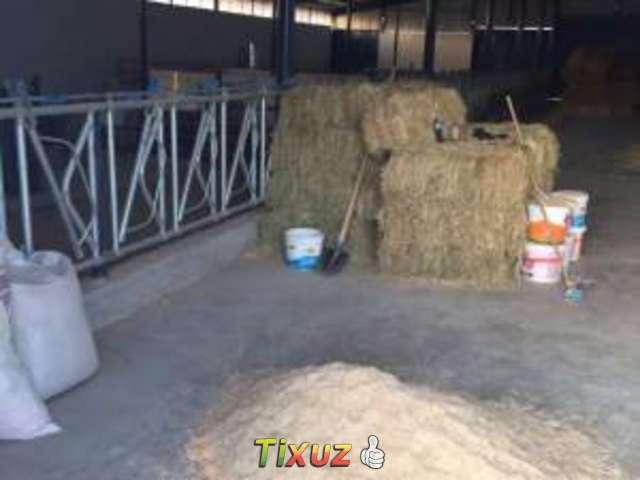 burna fatmalik mevkiinde satilik çiftlik